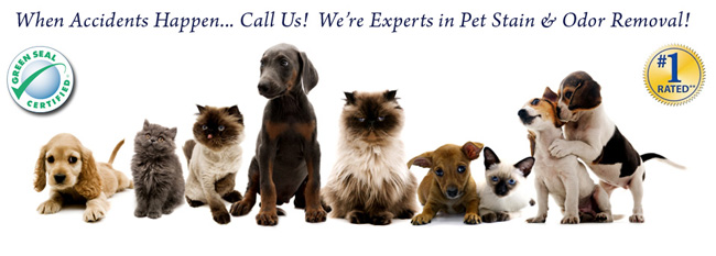 Pet Odour Removal Services Ottawa