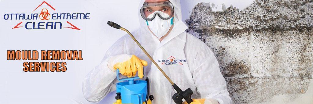 Mould removal ottawa