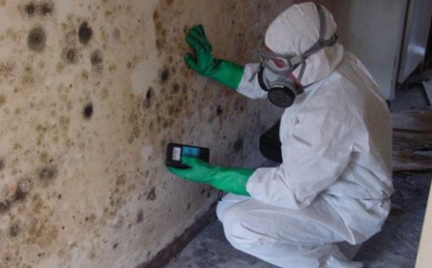 mold in basement Ottawa