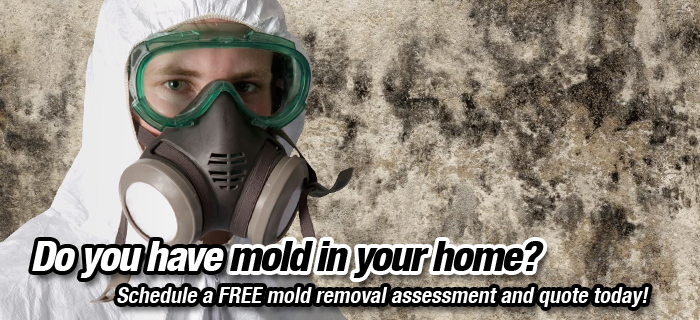 Mould inspection services, Ottawa