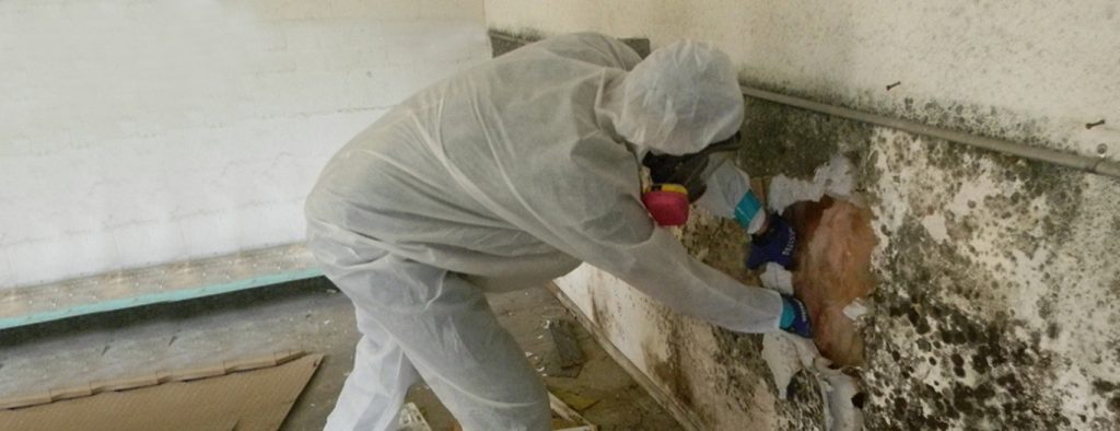 Removal of Mould in Basement
