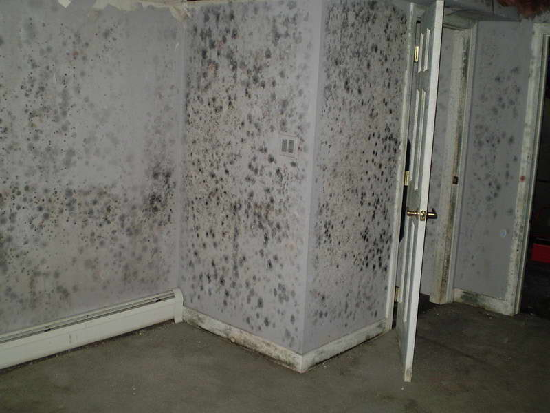 remove basement mold, London