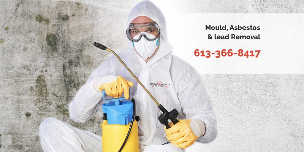 mold removal services, Ottawa